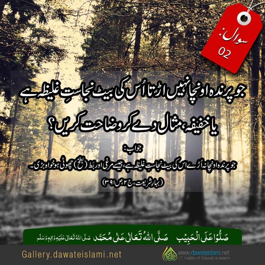 jo parindah ooncha nahi orhta os ki beet ka hukm batain , misaal day kar wazahat karain?