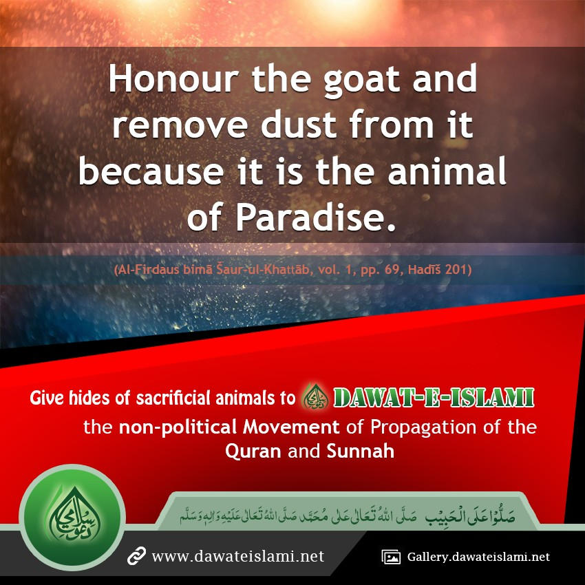 Take Care of a Goat as it is the animal of Paradise.