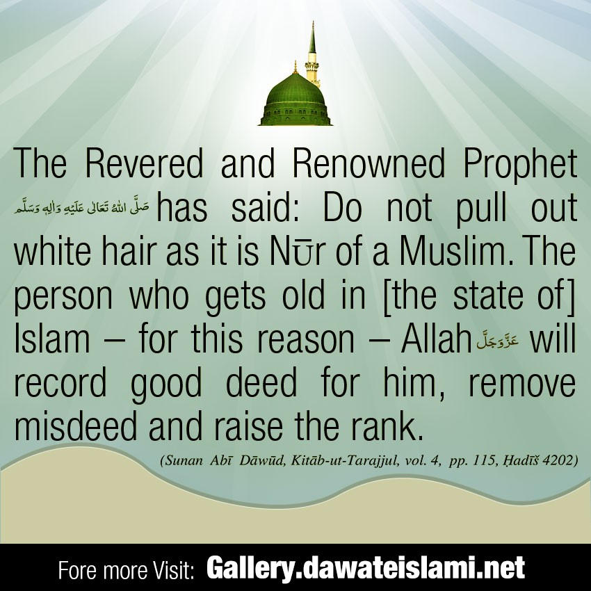 Do not pull out white hair as it is Nūr of a Muslim