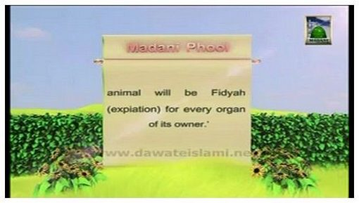 Madani Flower Of Sacrifice(10) - Sacrified Animal Will Help