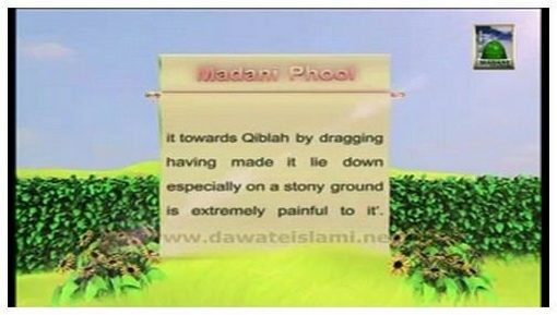 Madani Flower Of Sacrifice(16) - Determine Direction Of Qibla