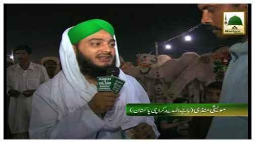 Short Clip - Road Show - Qurbani(Mandi Maweshiyan Bab ul Madina Karachi 2013) - Clip:04