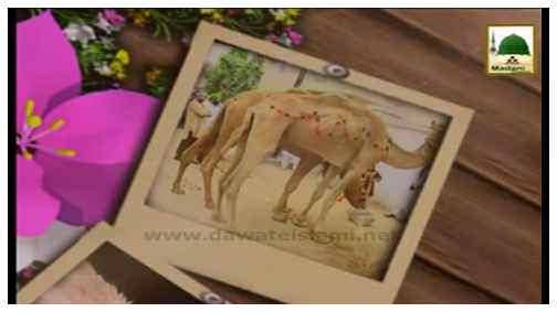 مدنی پھول - امیر اہلسنت دامت برکاتہم العالیہ قربانی کا جانور خریدنے کے مدنی پھول ارشاد فرماتے ہوئے