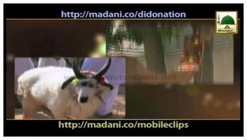 Madani Muzakray Ki Madani Mahak(73) - Qurbani - 4 Adami Qurbani Kar Saktay Hain?