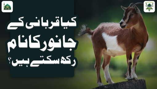 Qurbani Kay Janwaron Kay Naam Rakhna Kaisa?