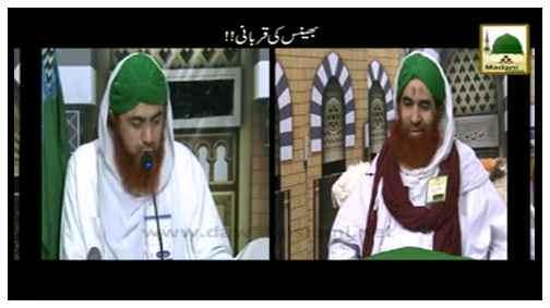 Bhains Ki Qurbani Jaiz Hai?