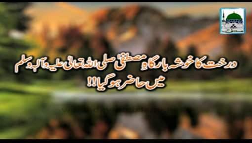 Darakht Ka Khosha Bargah e Mustafaﷺ Main Hazir Ho Gaya