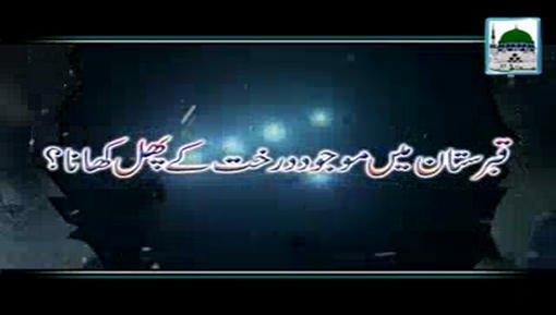 Qabristan Main Mojod Darakht Kay Phal Khana