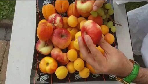 اللہ کی نعمتوں میں ایک نعمت پھل بھی ہے
