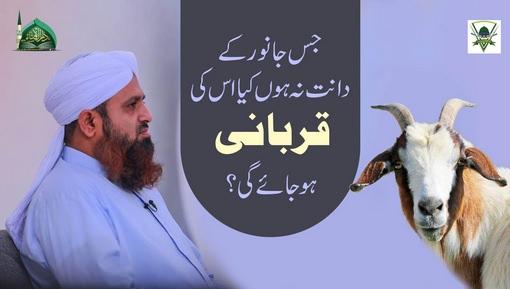 Jis Janwar Kay Dant Na Hon Us Ki Qurbani Karna Kaisa?