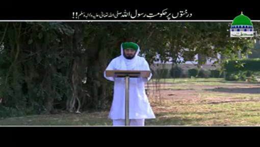Darakhton Par Hukumat e Rasoolullah ﷺ