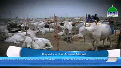 Report On The Animal Market