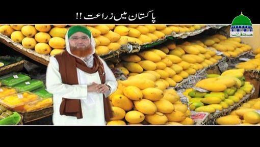 Pakistan Main Zaraat