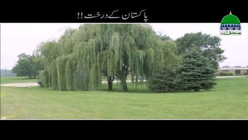 Pakistan Kay Darakht