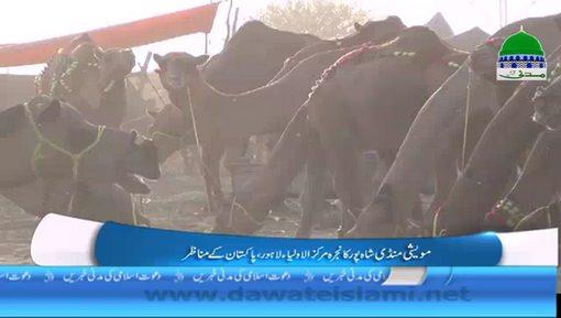 Lahore Maweshi Mandi Par Aik Jaiza