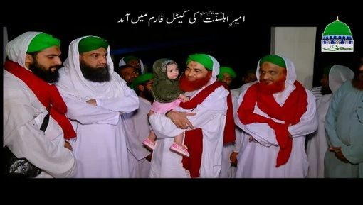 Ameer e Ahlesunnat Ki Cattle Farm Main Amad