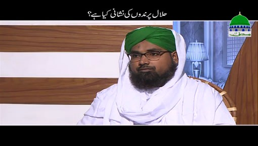 Halal Parinday Ki Nishani